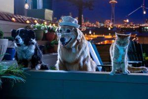 Psy i koty 3 Online